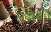 Organic Mix – готовые решения для вашего сада