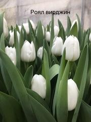 Свежие цветы оптом к 8 марта в Минске