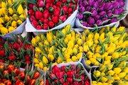 Тюльпаны оптом к празднику.
