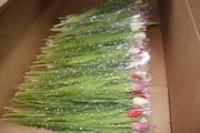Бронирование тюльпанов,  букетов для компаний к 8 Марта