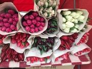 Белорусские тюльпаны оптом под заказ.