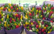 Свежие Тюльпаны Экстра класса оптом к 8 марта.