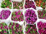 Тюльпаны. Самые востребованные Цветы на 8 Марта. Оптом.